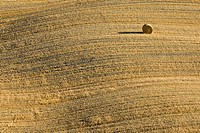 Italy, Tuscany, Single bale of straw on harvested corn field