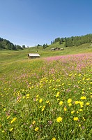 Austria, Salzburger Land, Flowering meadow