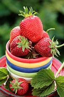 Ripe strawberries in a cup on the fresh air