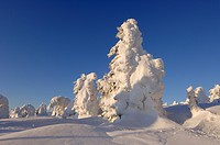 Germany, Saxony_Anhalt, Snowcapped trees