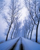 Road, winter, snow, trees, fog, misty, foggy, land