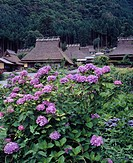 Thatched hydrangea, private house, Miyama Kyoto, Japan