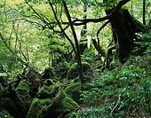 Shiratani Unsui valley, Yakushima Island, Kagoshima, Japan