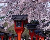 Hirano Shrine, Approach to a shrine, Spring, Kyoto, Kyoto, Japan