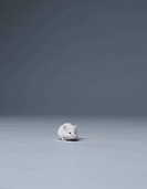 White mouse sitting alone