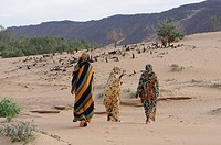 Women with scarfs and traditional dress on their way home near Atar Western Africa Mauretania Africa