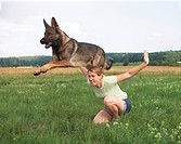 German Shepherd dog jumping over womanrestrictions: animal guidebooks