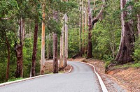 Road through Karri Forest, Valley of the Giants, Western Australia, Australia, Pacific