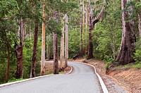 Road through Karri Forest, Valley of the Giants, Western Australia, Australia, Pacific