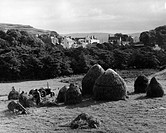 agriculture, farm labour, harvest, hay, farmers in field, harvesting hay, Portree, Isle of Skye, Scotland, 1950s, farmer, fields, tractor, houses, vil...