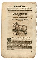 zoology / animals, textbooks, Historia animalium, by Conrad Gessner, Zurich, Switzerland, 1551 _ 1558, paca Cuniculus paca, woodcut, historic, histori...