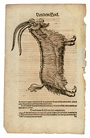 zoology / animals, textbooks, Historia animalium, by Conrad Gessner, Zurich, Switzerland, 1551 _ 1558, domestic goat Capra aegagrus hircus, woodcut, h...