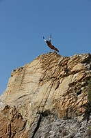 Courageous diver diving off cliff into Pacific Ocean, Acapulco, Mexico