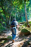 Young man walking in forest with hiking equipment, rear view