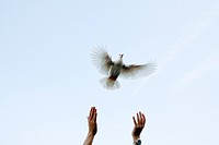 Person releasing pigeon, focus on hands