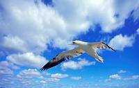 Wolkenhimmel über ostfriesland