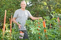 Senior man with tomatoes in garden, Winnipeg, Canada