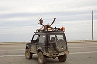 Moose head strapped to car roof, Gaspesie, Quebec