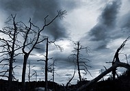 Toter Wald Dead trees and dark clouds