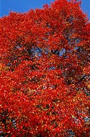 England, Sussex, Autumn Leaves in Sheffield Park Garden