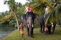 TOURISTS RIDING ELEPHANTS, MUHAMMA, KERALA