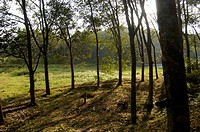 RUBBER PLANTATIONS OF TRIVANDRUM DISTRICT