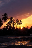 palm trees at sunset, Kilwa Kivinje, South Coast, Tanzania