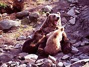 d: Geographie, Reise, Norwegen, Baerenpark Vassfaret. e: Geography, Travel, Norway, Bears, park, Vasfarret.