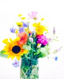 Vase of summer flowers. This vase includes sunflowers Helianthus annuus, large yellow, cornflowers Centaurea cyanus, blue, daisies white and yellow pi...