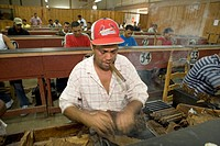 Dominican Republic _ Centre _ The Cibao Valley _ tobacco _ Santiago _ Cigar Factory