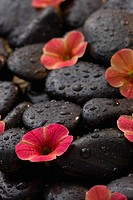 Fresh flowers arranged on wet spa rocks
