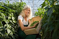 Woman picking green bell peppers in greenhouse