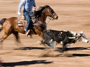 Roping competition at the Tucson Rodeo in Tucson, Arizona, United States