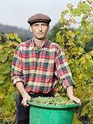 A vintner holding a bucket full of grapes