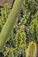 A large group of cacti