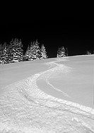 Ski tracks in the snow.
