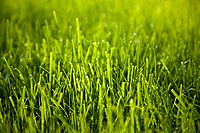 Close up image of grass (thumbnail)