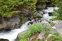 Waterfall into Paradise creek, Mount Rainier National Park, Washington, United States of America
