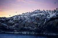 Birds on rock