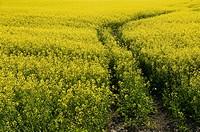 Manitoba, Canada: Crops