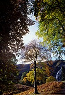 Powerscourt Waterfall, Co Wicklow, Ireland, View of waterfall through the trees
