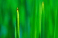 Close_up of leaf tip