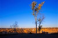 Fall city skyline