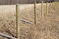 Rural fence posts