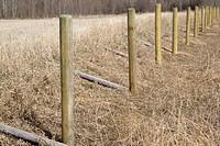 Rural fence posts
