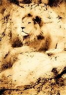 Old photograph of a lion on a rock