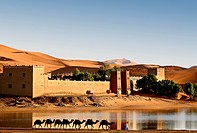 Caravan of camels in front of the Auberge Yasmina at the dunes of Erg Chebbi desert, Morocco, Africa