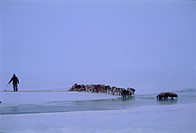 Photograph of an Eskimo and his dogs on the icy plains of Baffin Canada