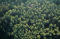 Aerial photograph of a forest in the Jerusalem mountains