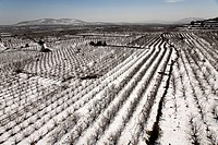 Aerial photograph of a frozen plantation in the Golan Heights